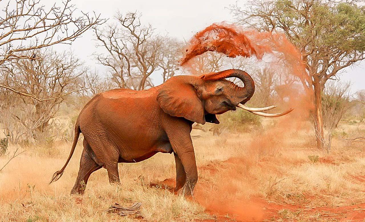 Elephants des parcs
