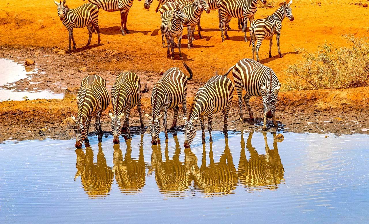 Safari au Senegal