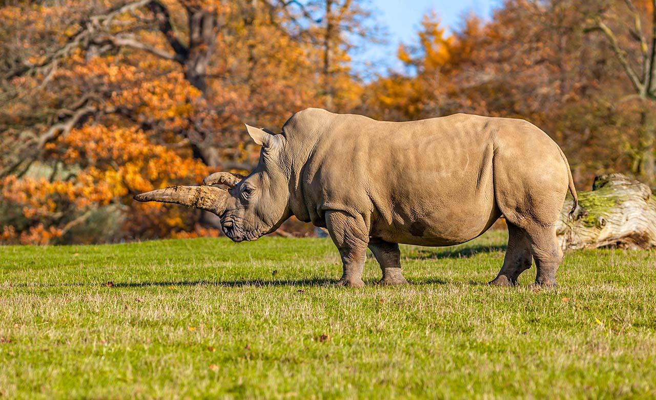 rhinoceros des parcs nationaux