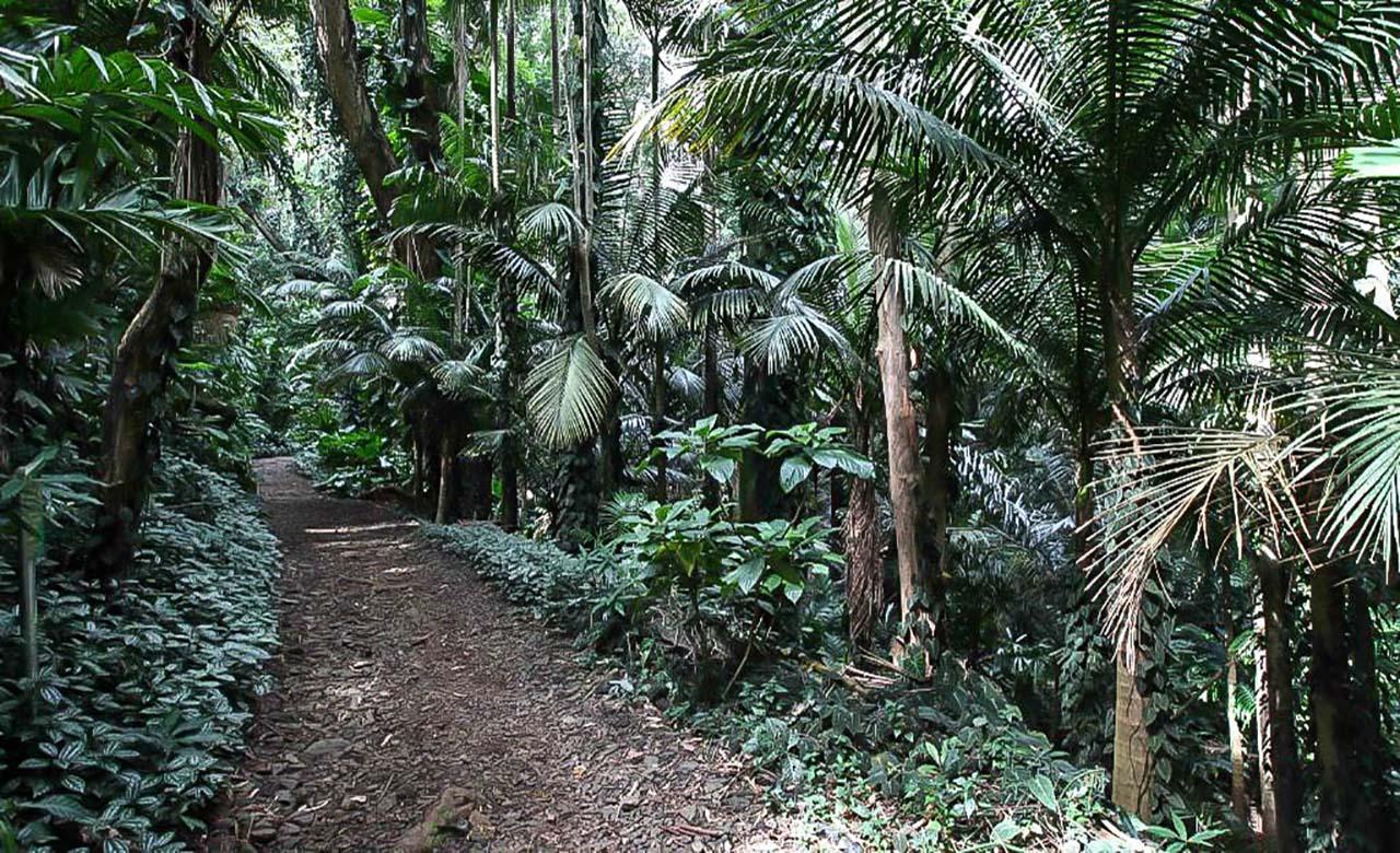 Arboretum de Sibang