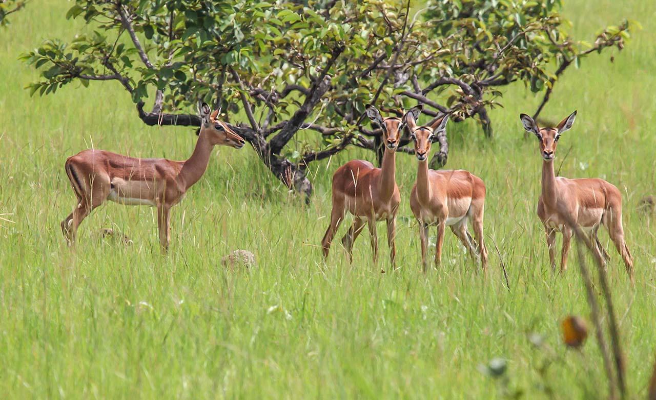 Parc National des plateaux Batéké