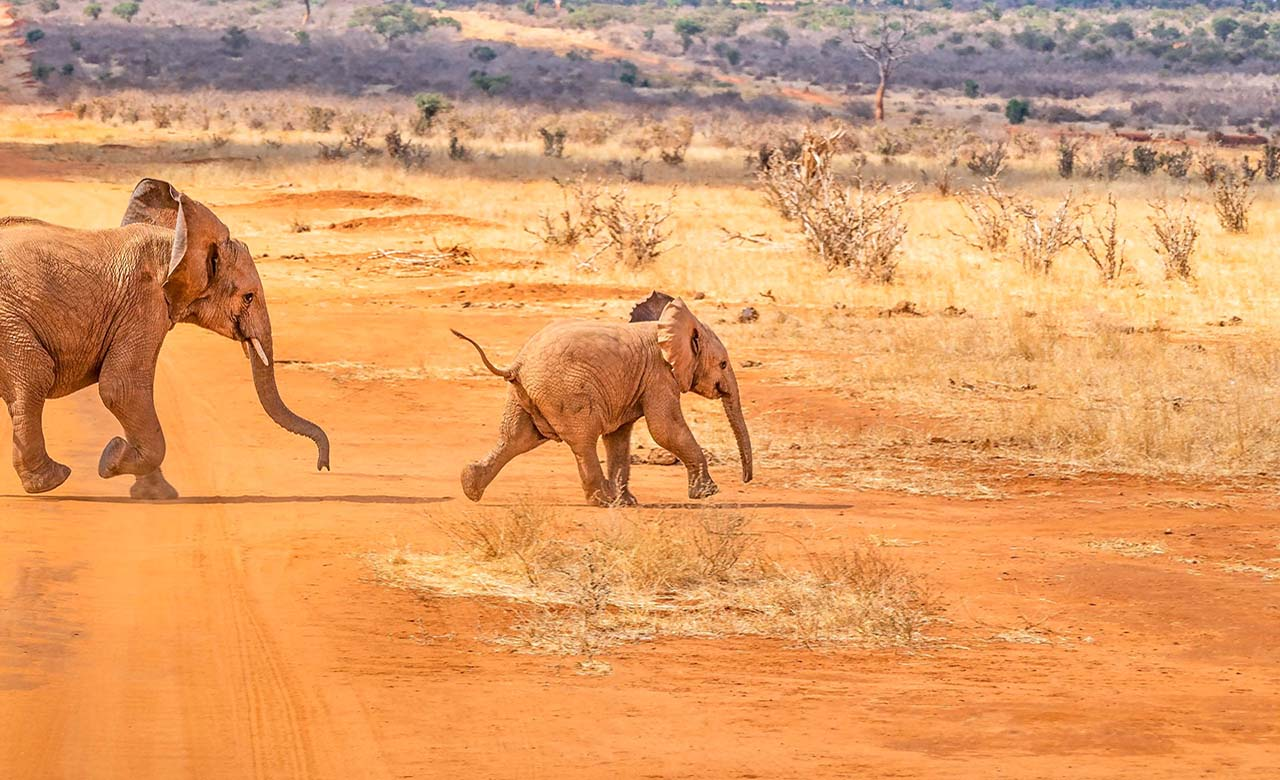 Safari au Gabon